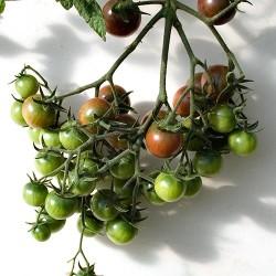 Black Cherry multi truss