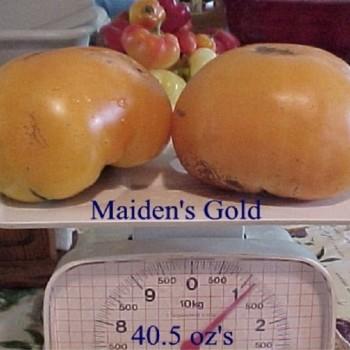 MaidensGold